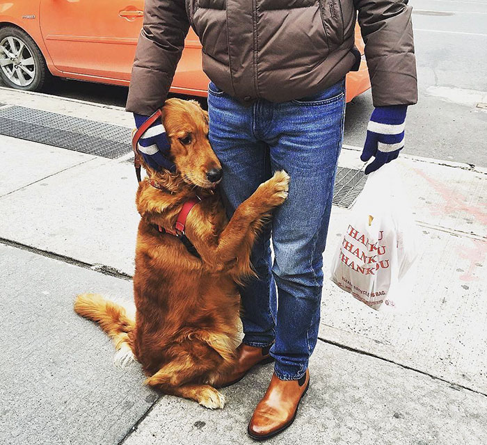 dog-gives-hugs-louboutina-retriever-new-york-11