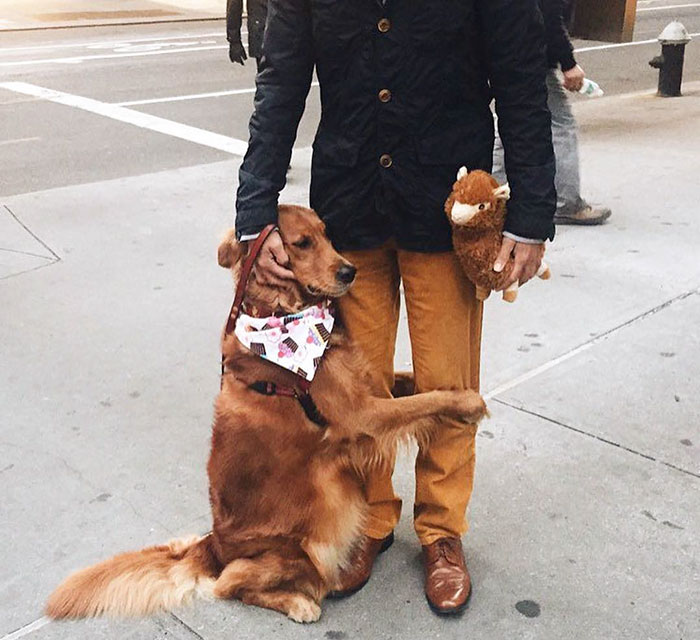 dog-gives-hugs-louboutina-retriever-new-york-19