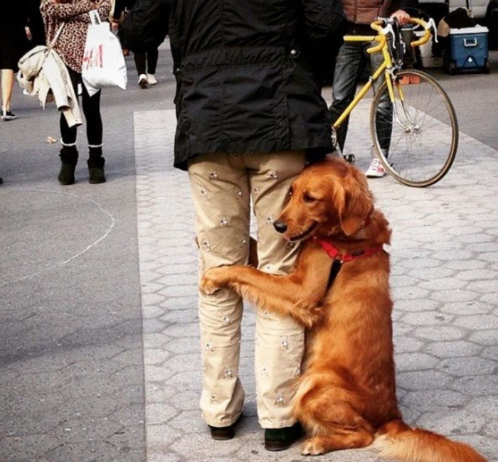 dog-gives-hugs-louboutina-retriever-new-york-4