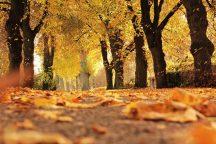 laika ziņas, laikapstākļi, laiks nedēļas nogalē, lietus, LVĢMC, oktobris, pirmais sniegs, rudens, Svarīgi, vējš